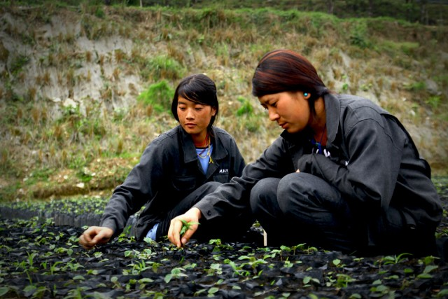 How Can Natural Capital Be Degraded