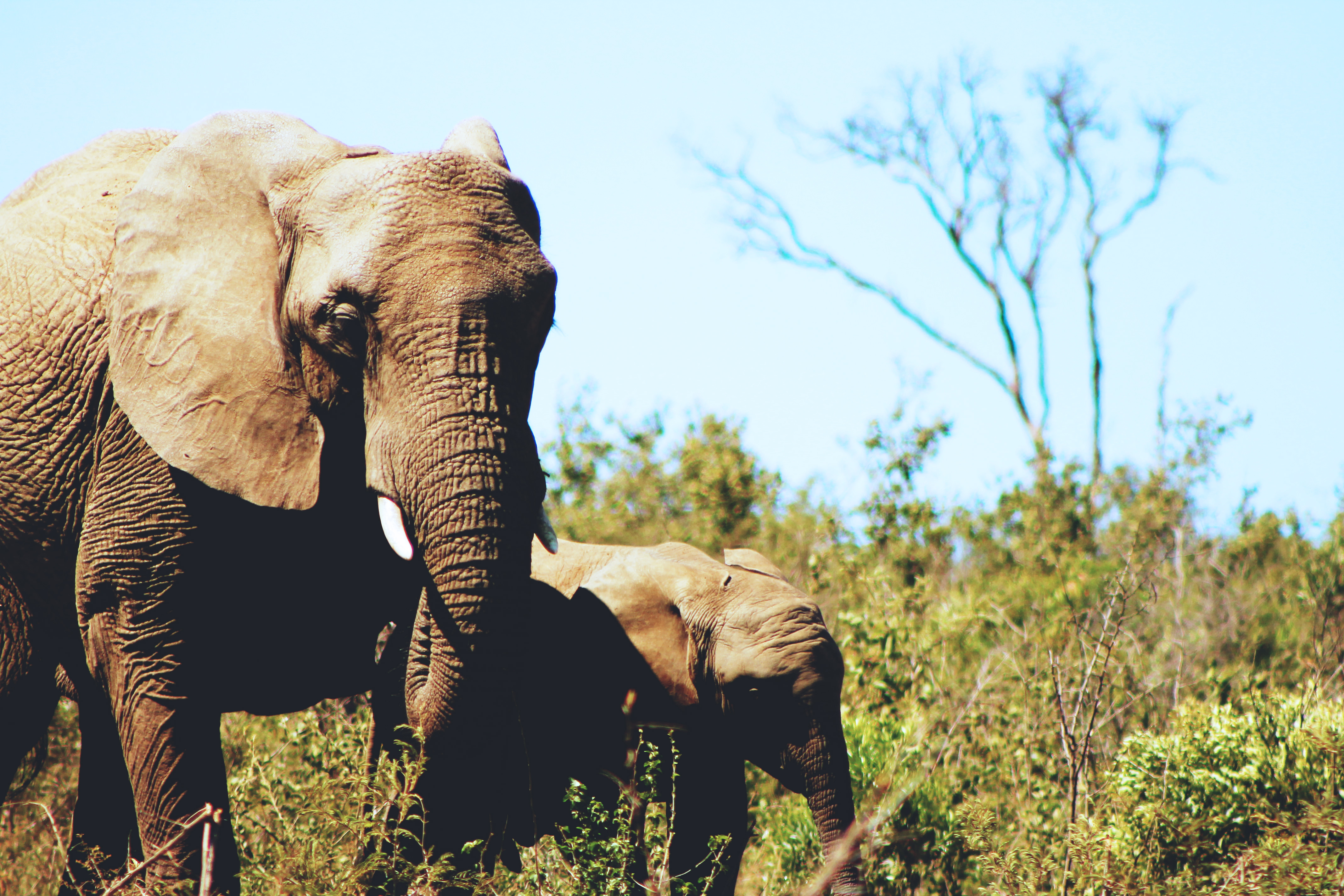 The ivory trade isn't just a disaster for elephants. It threatens our future too