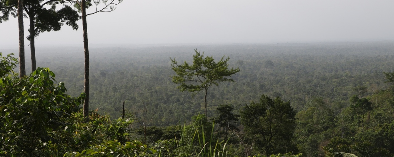 atewa_forest_photo_jan_willem_den_besten