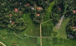 Natural Capital Coalition | Intensive Farming