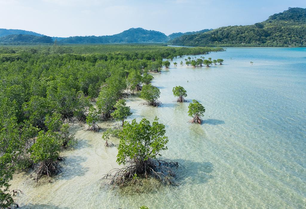 Mangrove_swamp_Iriomote_Island_Okinawa_Japan