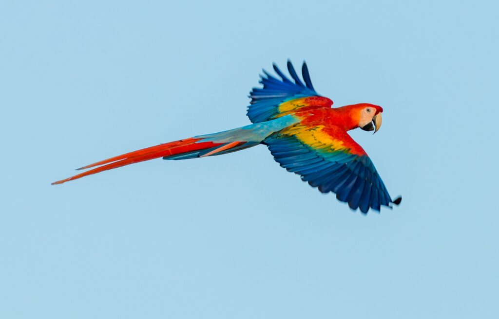 Natural Capital CoalitionHow the Stunning Scarlet Macaw Came Back From the  Brink - Natural Capital Coalition